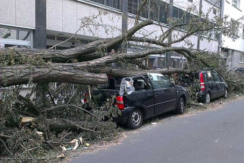 Tree fallen on cars